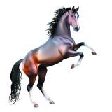 Изображение за кон